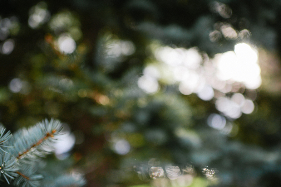blush photography-wedding-253