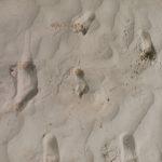 blushphotography-sanddunes-96