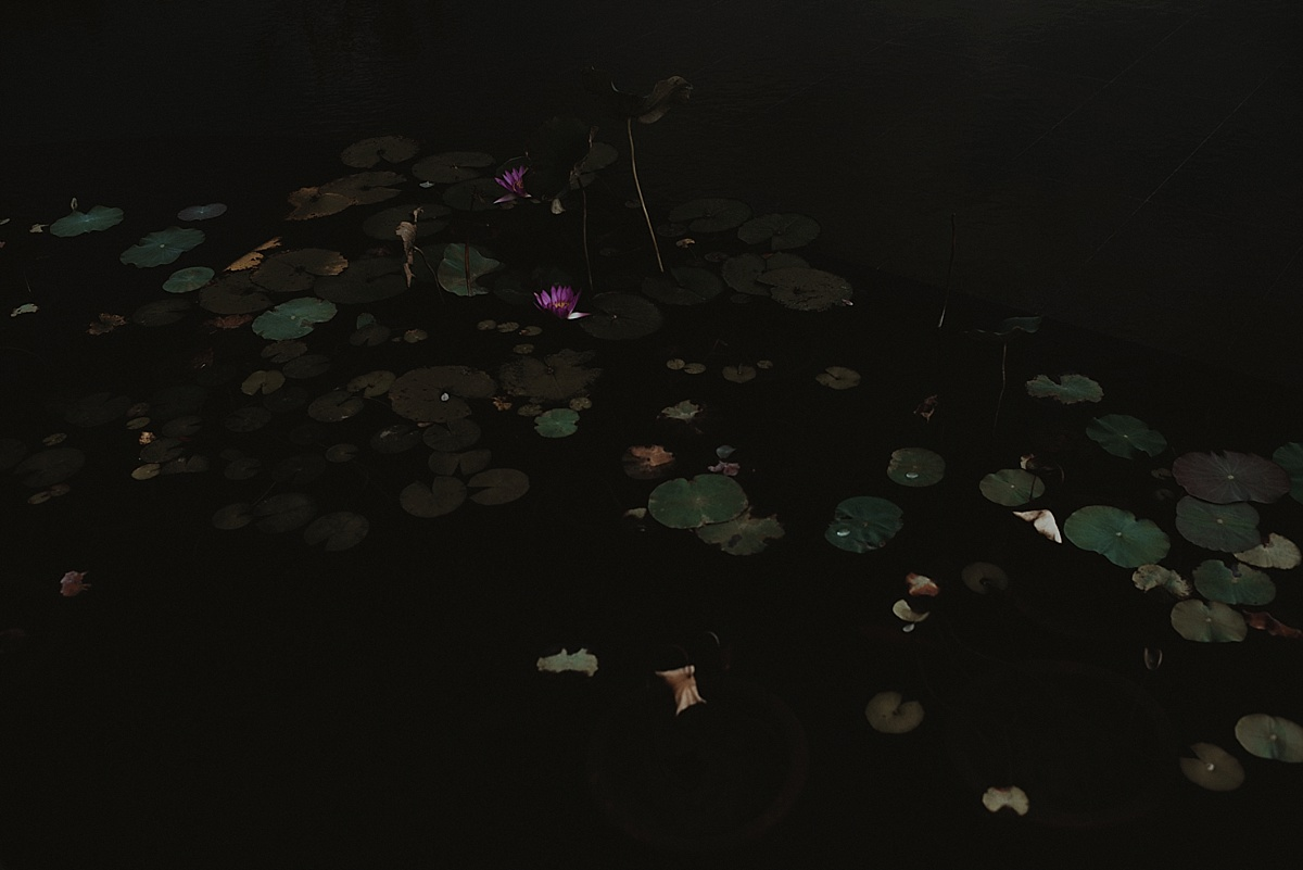 blushphotography-cj-hk-210