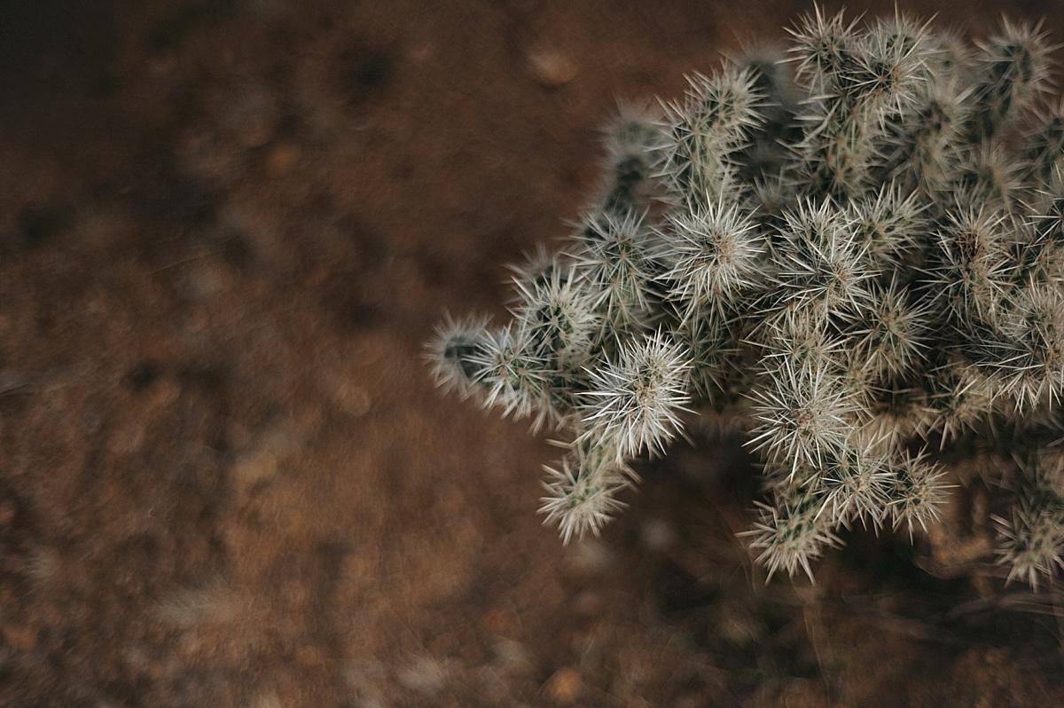 blushbyb-K+B-palmsprings-11